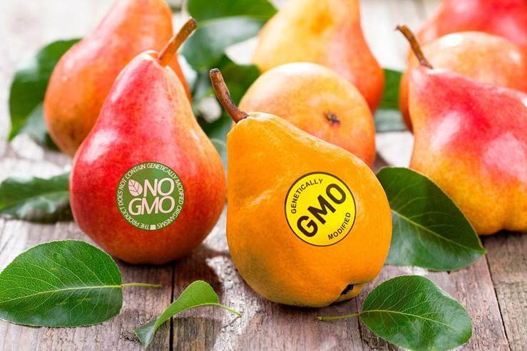 GM Food là gì? Thực phẩm biến đổi GEN có an toàn cho sức khỏe